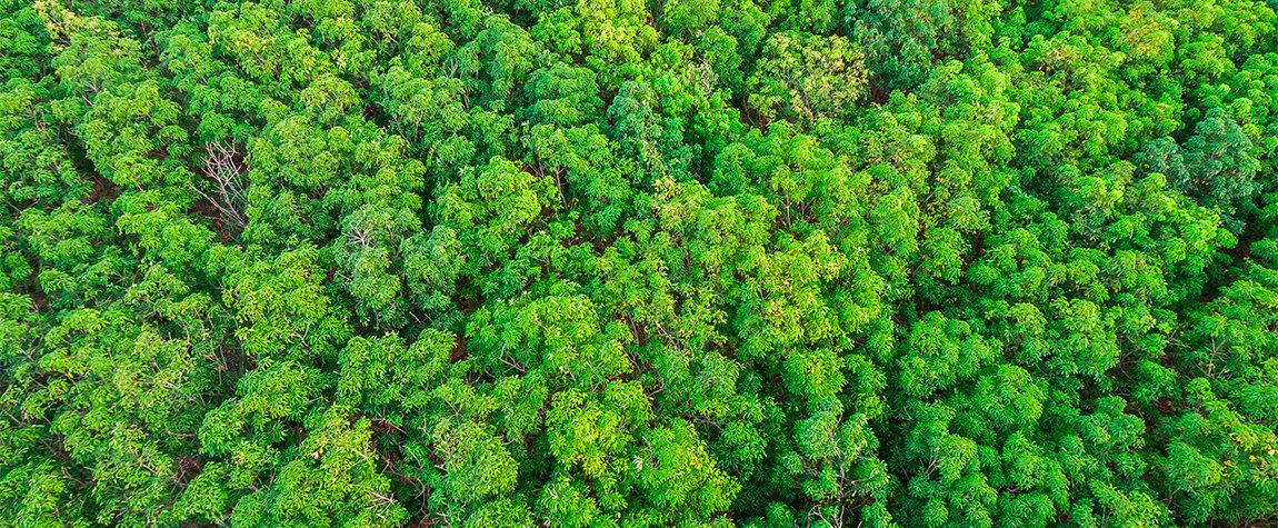 https://shareholdersandinvestors.bbva.com/wp-content/uploads/2017/06/2015-año-récord-en-la-emisión-de-bonos-verdes.jpg